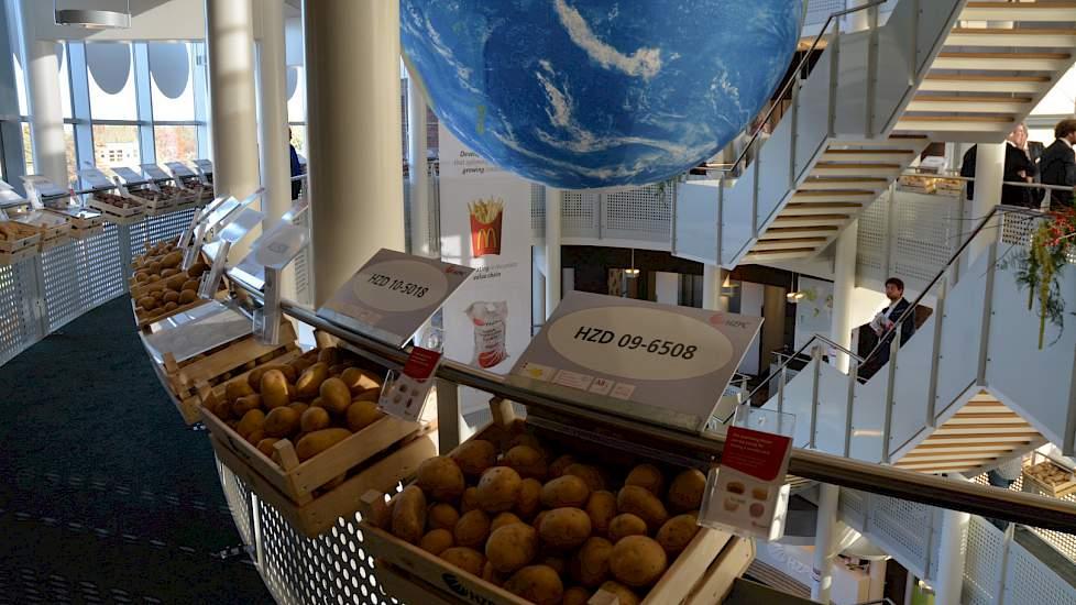"""De 20 procent kleinere aardappelopbrengst leidt tijdens de rassenshow tot veel vragen van buitenlandse klanten, zegt directeur Gerard Backx van HZPC. """"Ze vragen zich af of er wel voldoende pootgoed beschikbaar is."""" Duidelijk is dat er niet genoeg is voor"""