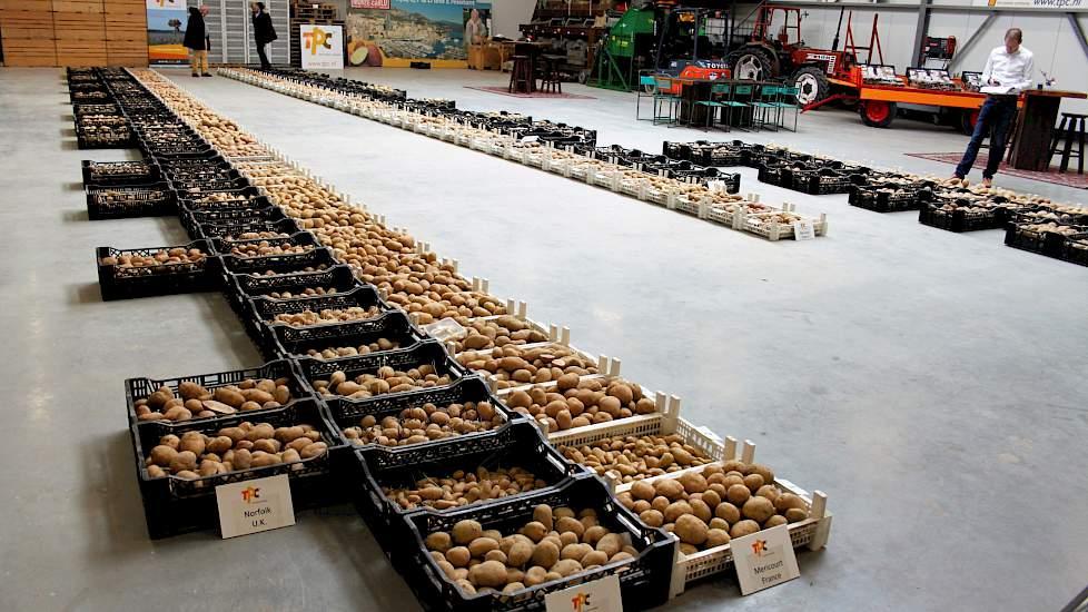 Bij The Potato Company in Emmeloord staat het hele rassenscala met de oogstresultaten van drie Europese proefveldlocaties - Norfolk (VK), Bologna (IT) en Mericourt (FR) - overzichtelijk in de hal. Ook hier komen de extreme zomermaanden meteen bovendrijven