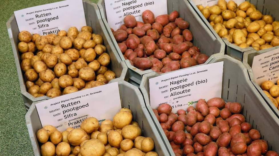 Bayer Crop Science › Biologisch fungicide geeft duidelijk