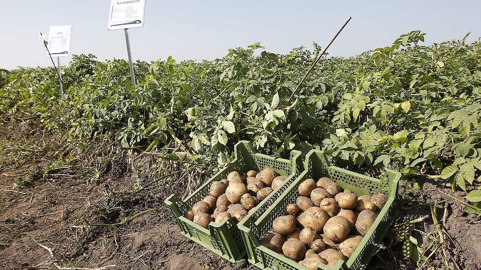 bladmestdemo aardappelen akkerbouwdag forfarmers kloosterhaar s r. ລາຍລະອຽດ